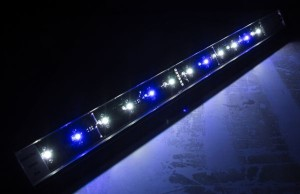 Blue.White LED2